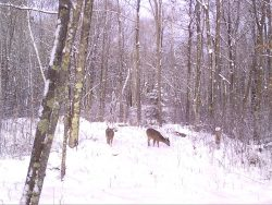 Trail Cam Images