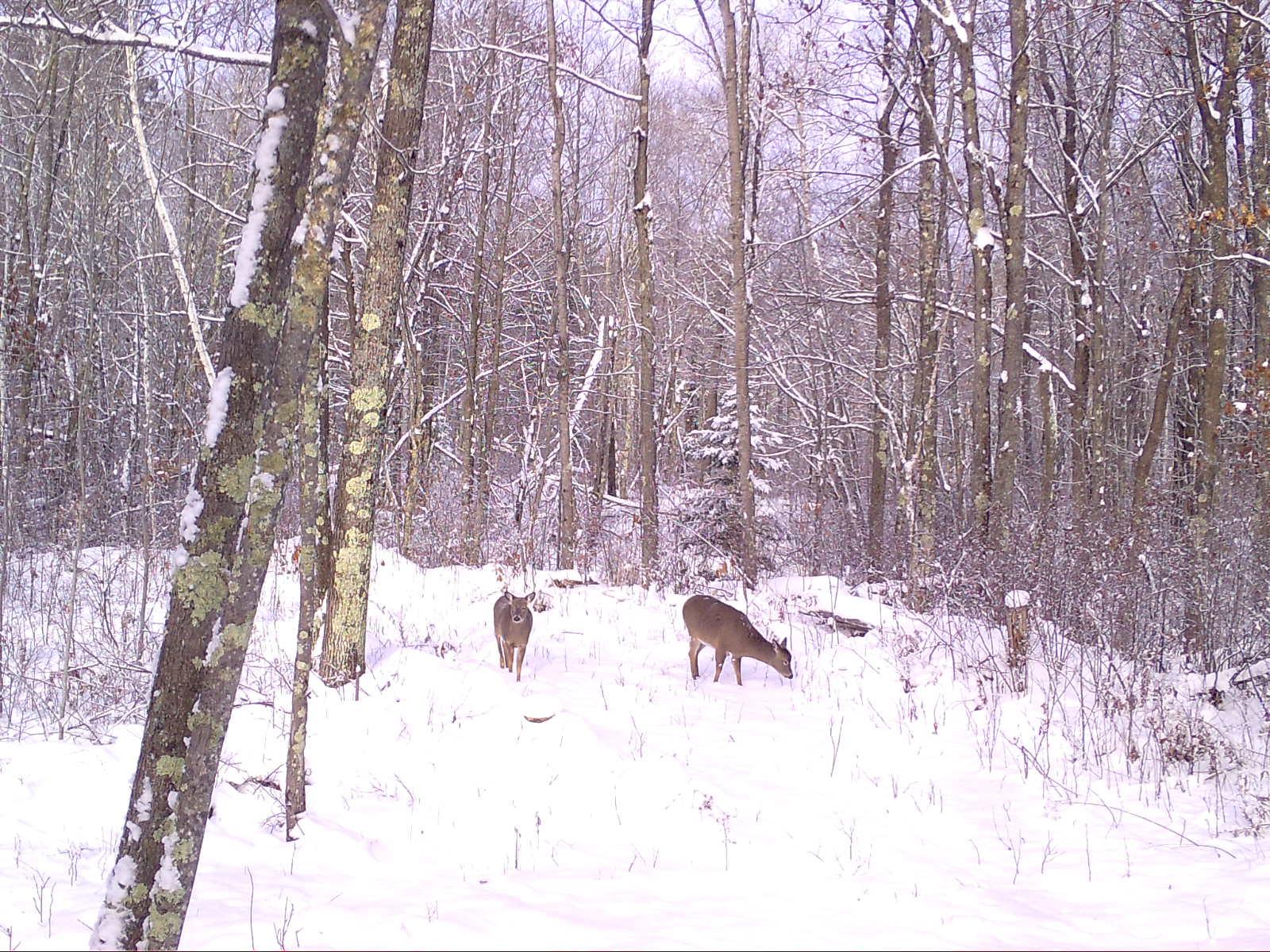 Trail Cam Images