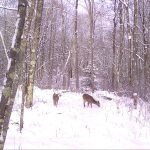 Trail Camera Images
